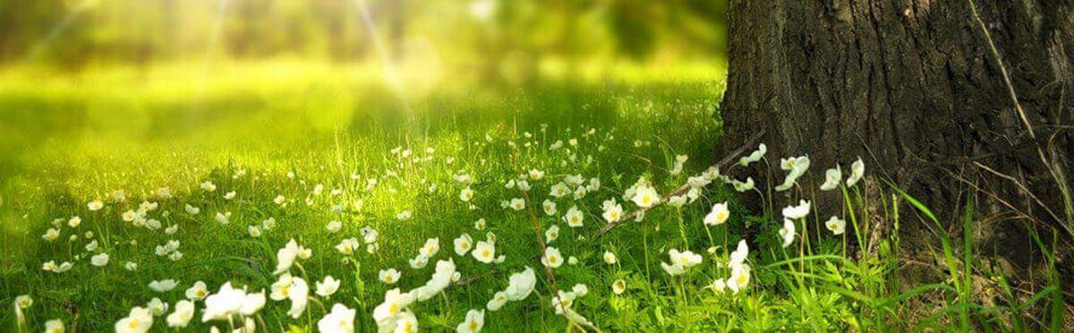 Arriva la primavera, prepariamo il nostro corpo