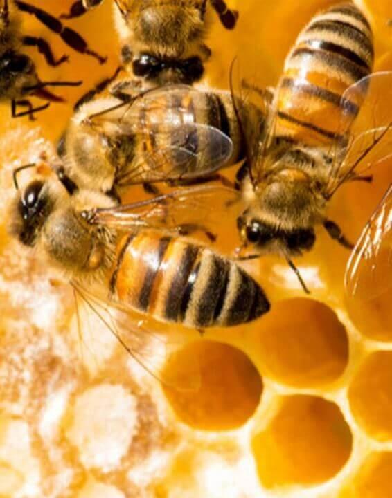 Black Bee – La Regina delle Api