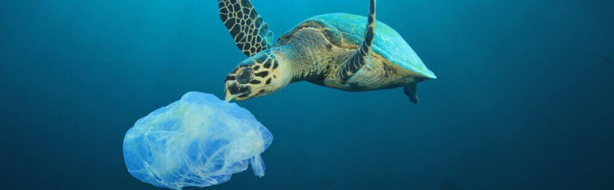 Semplici gesti per salvare la Terra!