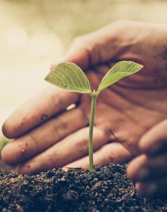 Sostenibilità: l'impegno etico di Céréal